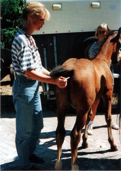 Как ухаживать за лошадью: основные правила