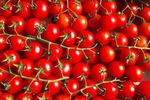 Сорт томата рапунцель: описание, урожайность и отзывы