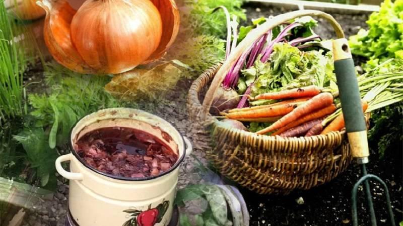 Луковая шелуха для огорода или сада: применение и польза подкормок. полезные советы