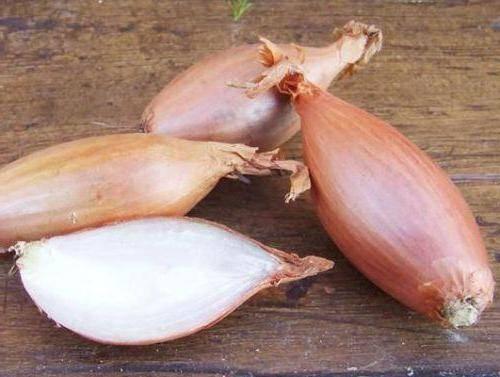 Описание сорта лука бамбергер, его характеристика и выращивание