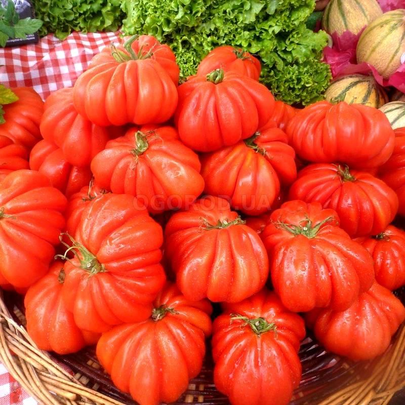 Описание сорта томата красотка f1, его характеристика и урожайность