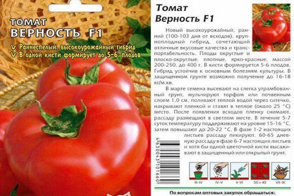 Томат семейный: характеристика и описание сорта, урожайность с фото