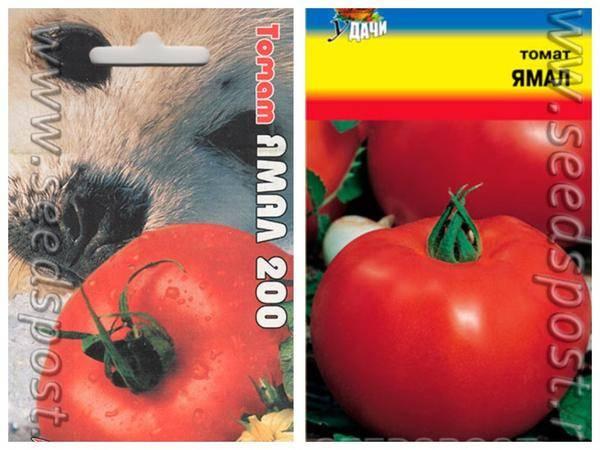 Выращиваем томаты большой мао розовый f1 — описание сорта и особенности выращивания