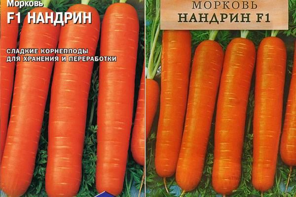 Описание, характеристика и особенности выращивания лучших сортов моркови