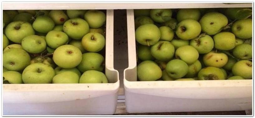Как сохранить яблоки в домашних условиях