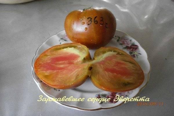 Характеристика сорта томата медовое сердце, его урожайность