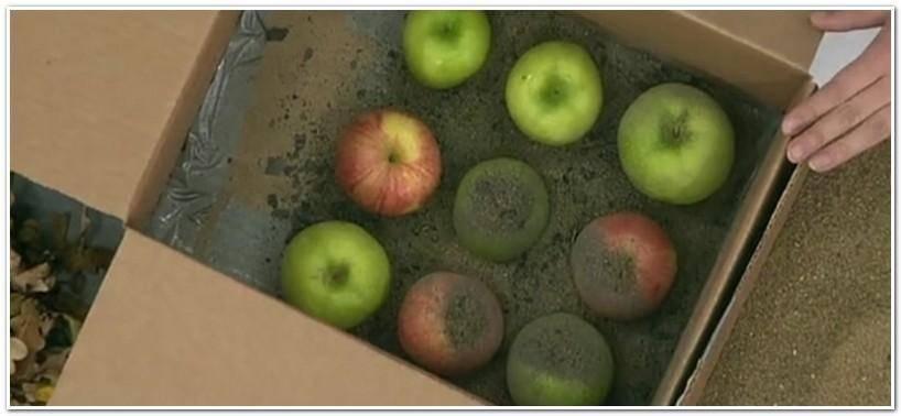 Температура и условия хранения яблок на зиму в погребе и квартире