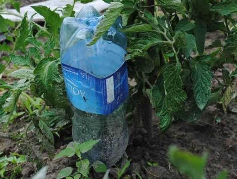 Как сделать капельный полив с помощью пластиковых бутылок?