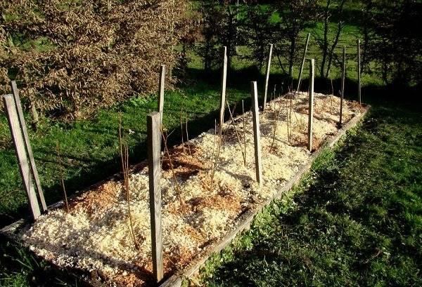 Когда лучше сажать малину – осенью или весной, какие сроки выбрать