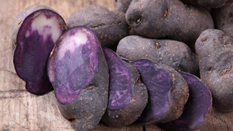 17 лучших желтых сортов картофеля с желтой мякотью и кожурой: описание и фото
