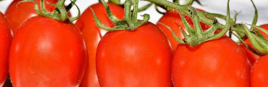 Подготовка семян помидор к посадке на рассаду