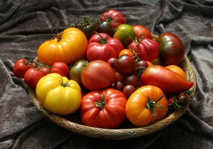Характеристики и описание сорта томата Рим, его урожайность