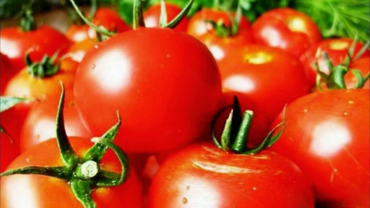 Лучшие сорта штамбовых томатов для открытого грунта и теплиц