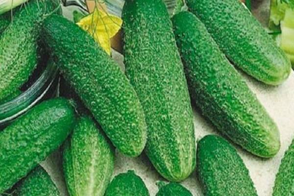 Описание сорта огурца Гинга, особенности его выращивания и ухода