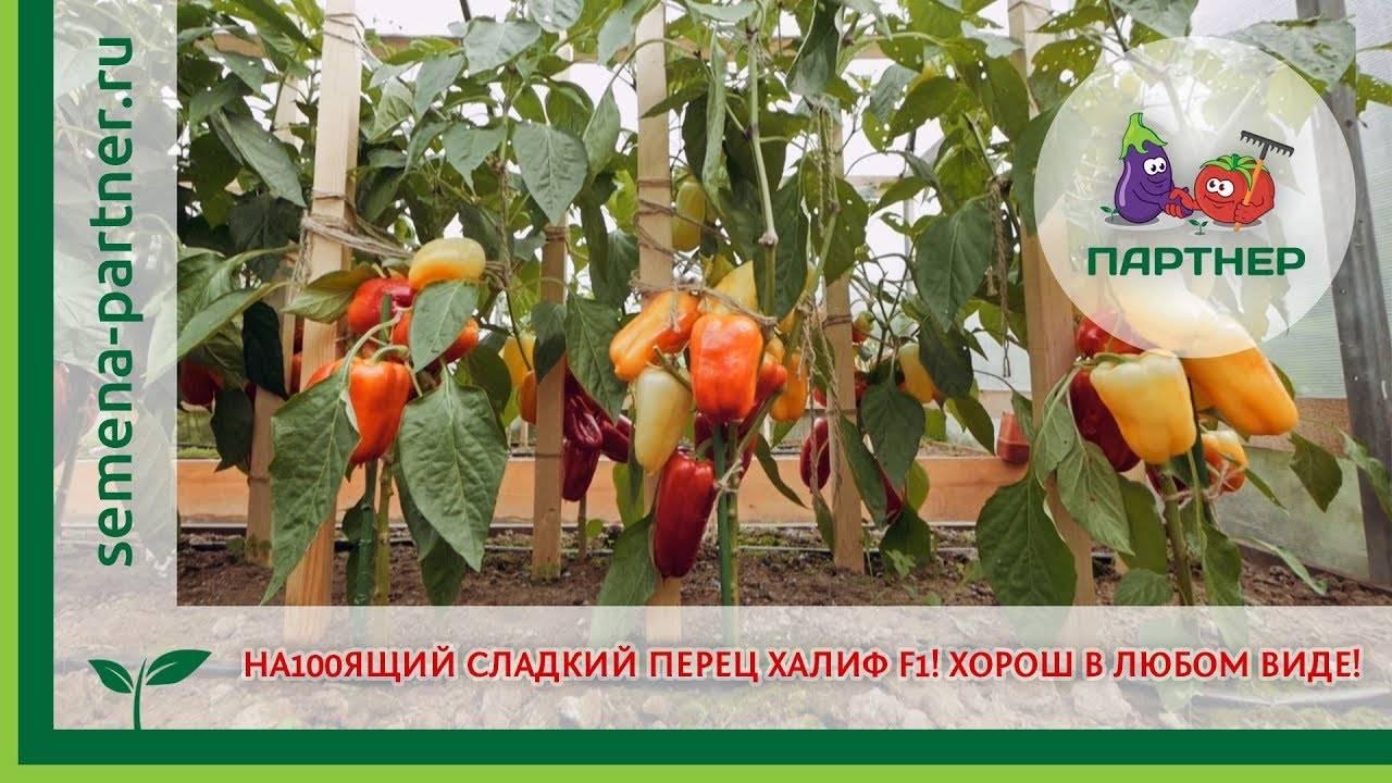 Описание лучших сортов смородины для подмосковья и тонкости выращивания