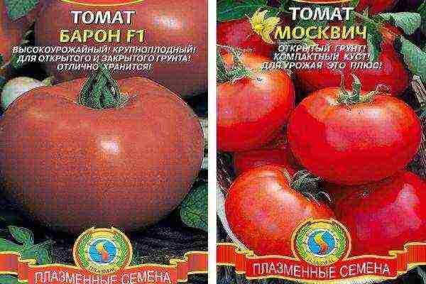 Подборка лучших сортов томатов для выращивания в кировской области