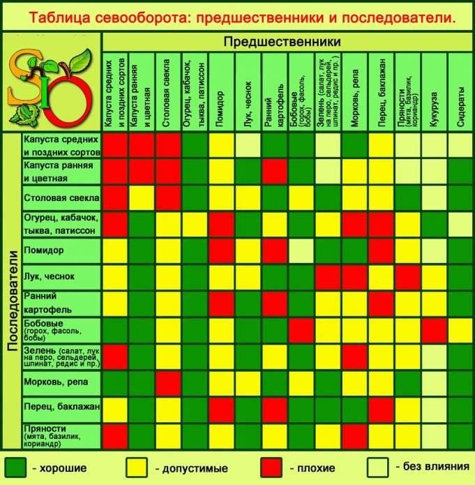 Что можно сажать после перцев, а что нельзя: список овощных культур
