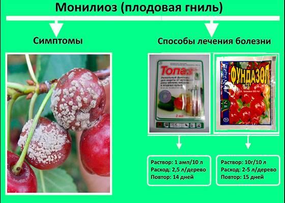 Причины и симптомы монилиоза яблони, как лечить заболевание различными средствами