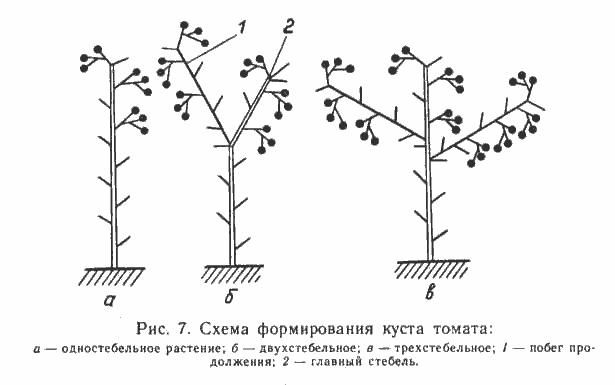Пасынкование огурцов в теплице и в открытом грунте — пошаговая инструкция для начинающих