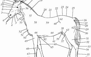 Зубы лошади: сколько резцов и других видов, правила ухода и аномалии