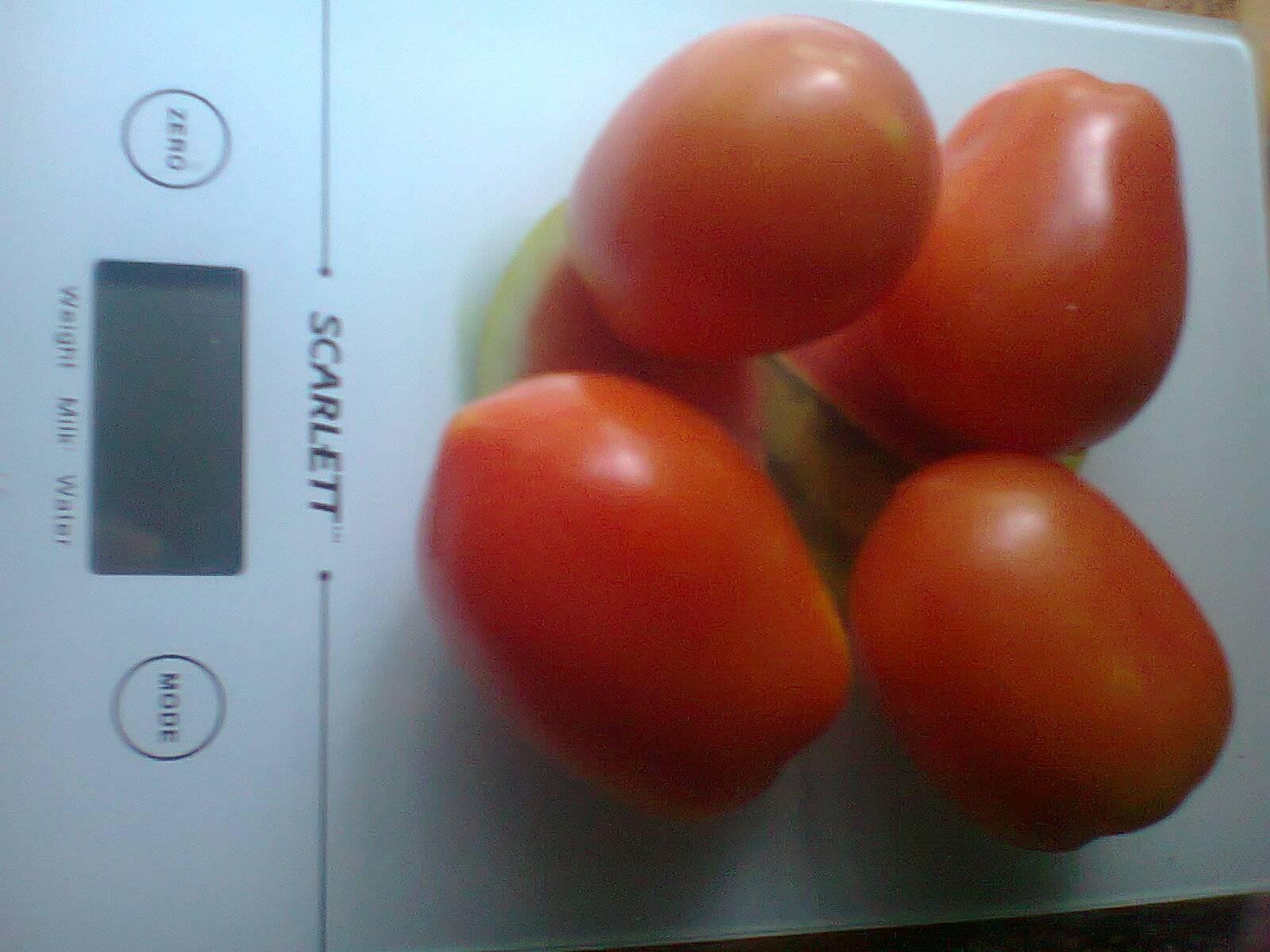 Секреты увеличения урожая томатов в 8 или 10 раз. описание метода выращивания помидоров по маслову