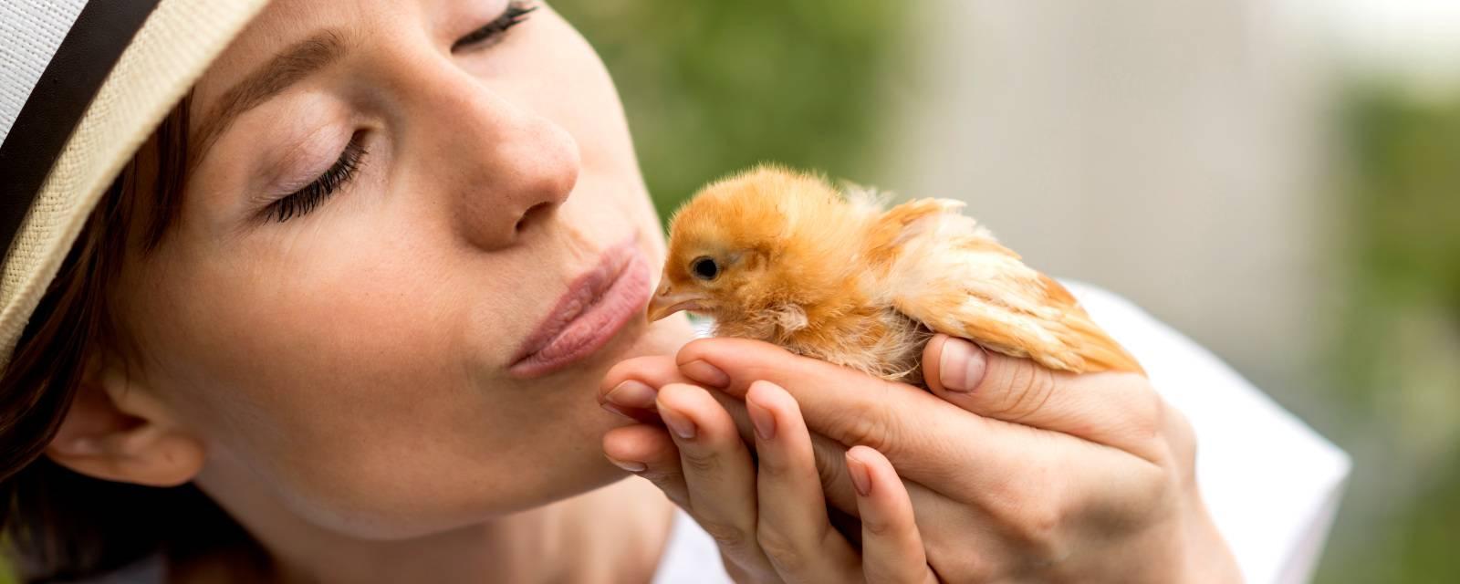 Аптечка для цыплят