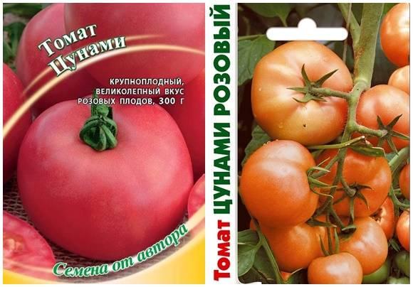 Томат пародист: описание и характеристика сорта, мнения садоводов с фото