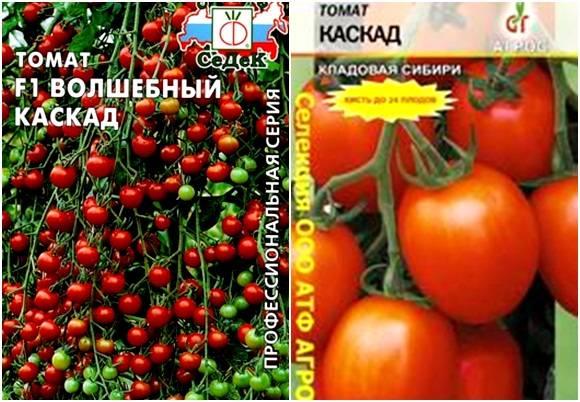 Характеристика и описание сорта томата Каскад, его урожайность