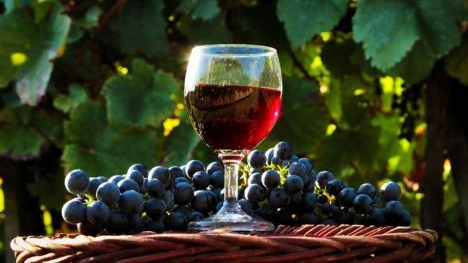Перчатка на вине не падает. что делать, если домашнее вино перестало бродить (не забродило вовсе)