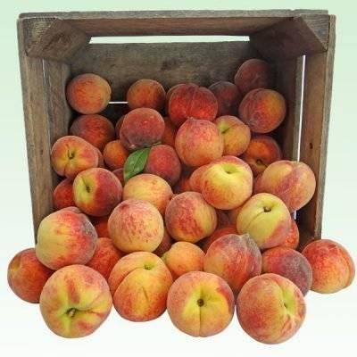 Характеристика сорта персика золотой юбилей с фото