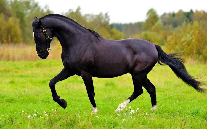 10 лучших русских пород лошадей