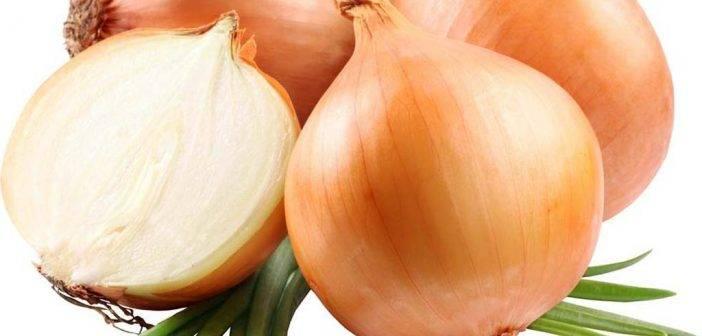 Поэтапное руководство по выращиванию лука из семян за один сезон без хлопот