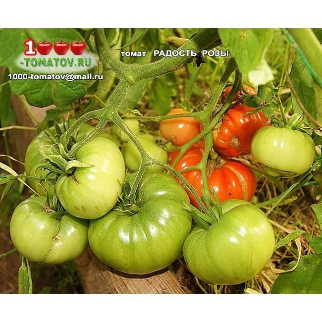 Как вырастить и ухаживать за помидорным деревом