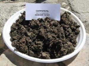 Сапропель - что это такое и как использовать его как удобрение