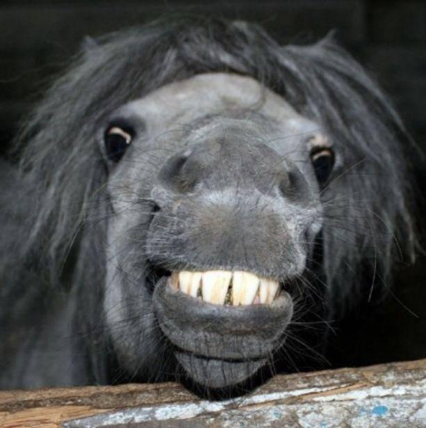 Зубы лошади — сколько и какие, как определить возраст по зубам