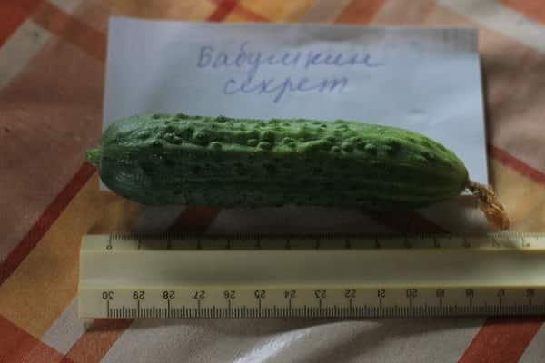Огурцы изумрудные сережки: описание и характеристика сорта, мнение садоводов с фото