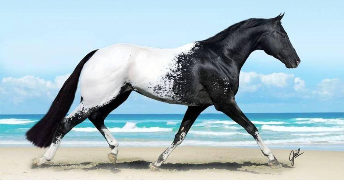 Сколько весит лошадь, средние параметры