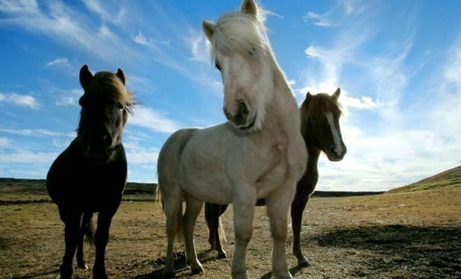 Какие бывают в россии породы лошадей