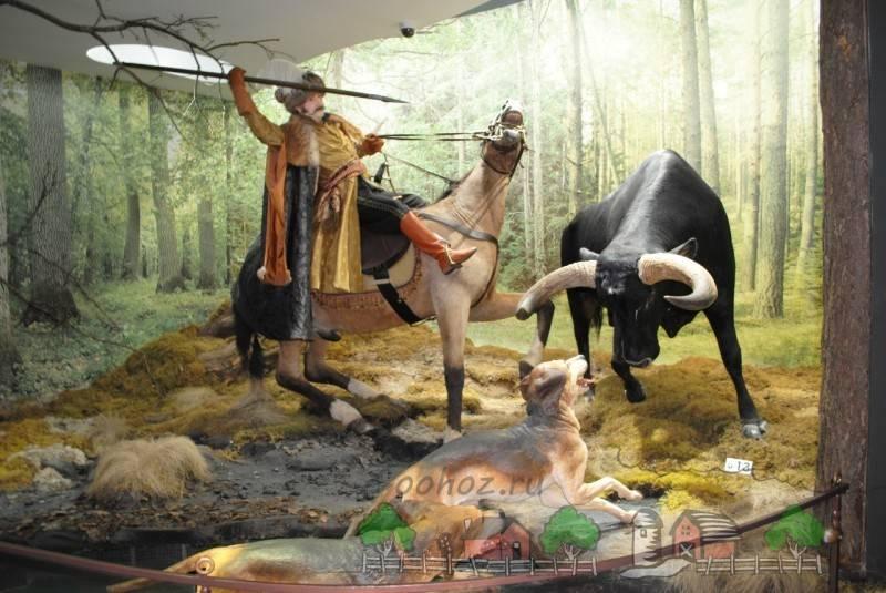 Первобытный бык: история дикого тура. историческая легенда — животное дикий бык тур тур или первобытный бык