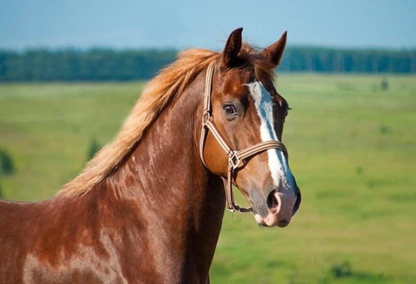 Строение и особенности зубов лошади. зубы у лошади: анатомия, определение возраста зачем пилить зубы лошадям: видео