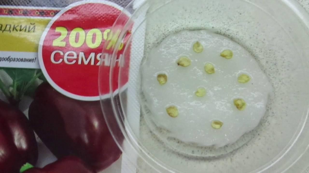 Проверка на всхожесть семян перца в домашних условиях
