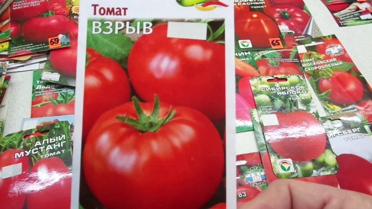 Взрыв томат описание. характеристика томата взрыв: посадка, выращивание и уход