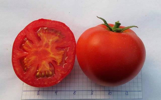 Суперсовременный гибрид — томат «снеговик» f1: описание и фото