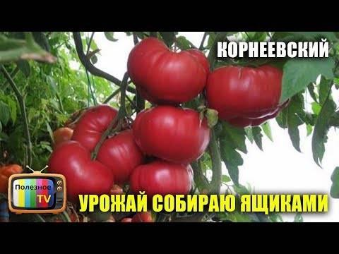 Томат корнеевский (розовый): что это за помидор, как его выращивать и какие отзывы оставляют о нем опытные огородники