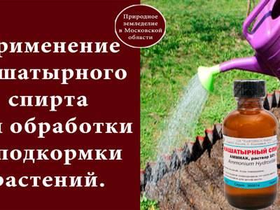 Почему нашатырный спирт бесполезен как удобрение для растений