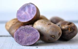 Любительский столовый сорт картофеля «цыганка» с фиолетовой кожицей и белой мякотью