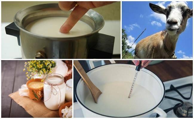Сыр из козьего молока: как сделать разные виды в домашних условиях? лучшие рецепты