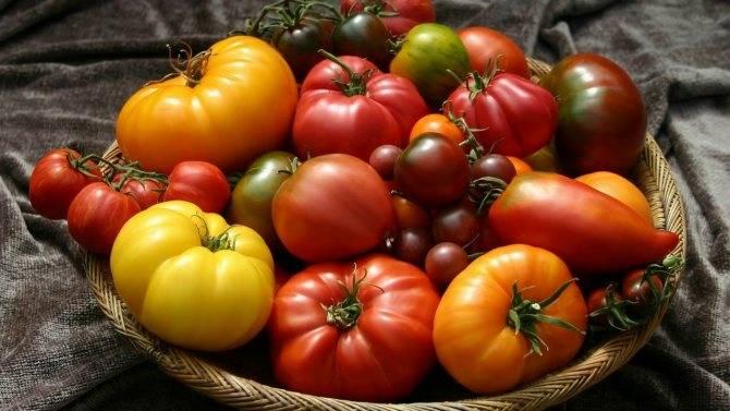 Характеристика и описание сорта томата Амулет, его урожайность