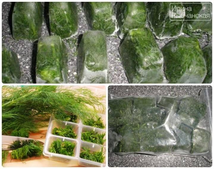 Можно ли сохранить укроп свежим в холодильнике и как его заготовить другими способами?