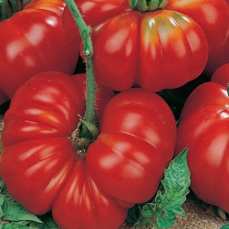 Характеристики и описание сорта томатов «ля ля фа» f1: выращиваем и едим с удовольствием